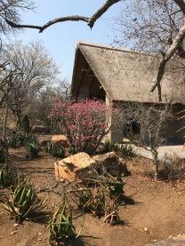 Kapama Southern Camp - contato com a natureza